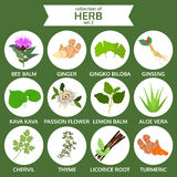 Collection of herb, healthy food vector, flat icon set two Stock Images