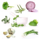 Collection of herbs Stock Photos