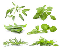Collection of herbs Royalty Free Stock Images