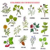 Collection of herbs for attention deficit disorder Stock Photo