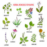 Collection of herbs for burns Stock Images