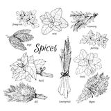 Collection of herbs. Stock Photography