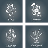 Collection of Herbs . Labels for Essential Oils and Natural Supplements. Lavender, Eucalyptus, Jasmine, Clove Stock Photography