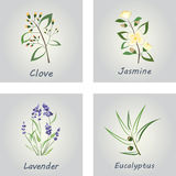 Collection of Herbs . Labels for Essential Oils Stock Photos
