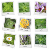 Collection of herbs and spices royalty free stock images