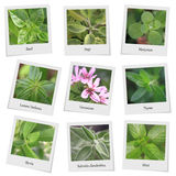 Collection of herbs and spices. Photo frames stock photography