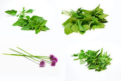 Herbs on the white background. Collection of herbs on the white background stock photo