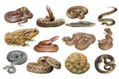 Collection of herpetofauna over white royalty free stock image