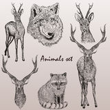 Collection of high detailed vector animals for design Royalty Free Stock Photo