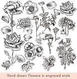A collection of high detailed vector hand drawn rose flowers in vector illustration