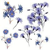 Collection of high realistic vector field blue flowers royalty free illustration