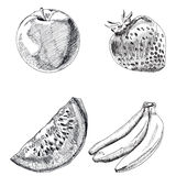 Collection of highly detailed hand drawn fruits set. Vector Stock Images