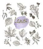 Collection of highly detailed hand drawn leaves and inflorescence  isolated on white background Royalty Free Stock Image