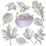 Collection of highly detailed hand drawn leaves isolated on white background Royalty Free Stock Photos