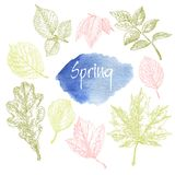 Collection of highly detailed hand drawn leaves isolated on white background Stock Photo