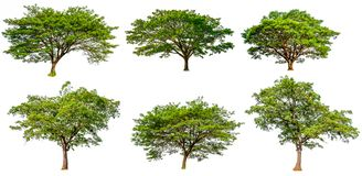 Collection hight quality big green tree royalty free stock image