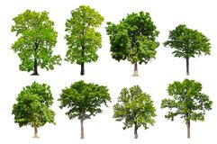 Collection hight quality big green tree royalty free stock images