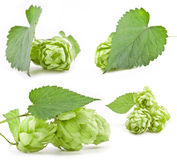 Collection of hops Stock Photos