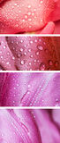 Collection of horizontal banners. Royalty Free Stock Photo