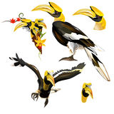 Collection of Hornbill Royalty Free Stock Images