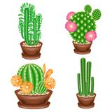 A collection of houseplants in pots. Cacti, euphorbia, Mammillaria with flowers. Lovely hobby for collectors of cacti. Home and royalty free illustration