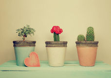 Collection of houseplants with wooden  heart Royalty Free Stock Photography