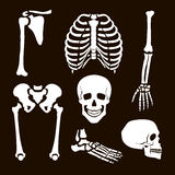 Collection Human Skeleton Stock Images