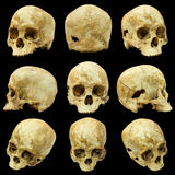 Collection of human skull Royalty Free Stock Photo