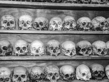 Collection of Human Skulls Royalty Free Stock Image
