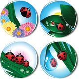 Collection of icons with a ladybird. Stock Image