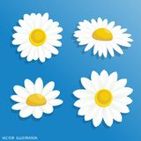 Collection. Illustration chamomile flowers. Beautiful white daisy flower isolated Royalty Free Stock Photos