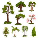 Collection of illustrations of trees. Sakura, pine, spruce, baobab, birch, palm. Collection of illustrations of trees. Sakura, pine, spruce, baobab, birch, palm royalty free illustration