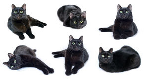 Collection of images of black cat. Lying in various poses isolated on a white background stock images