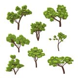 Collection of images of green deciduous trees. Royalty Free Stock Photography