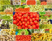 Collection of images from vegetable farmers Stock Images