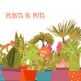 Collection of indoor plants and flowers in pots. Cartoon style. Green cactuses, succulents Royalty Free Stock Image