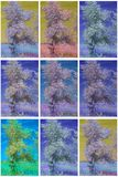 Collection of infrared trees Royalty Free Stock Photo