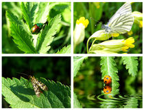 Collection insects. Collection of insects in the period of summer Royalty Free Stock Photo