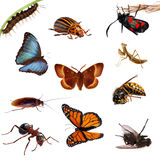 Collection of insects. Butterflies, caterpillars, Stock Photos
