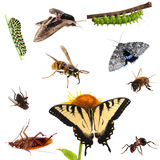 Collection of insects. Butterflies, caterpillars, moths, bees, ants etc. Stock Photos