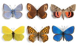 Insects Butterflies collection on white background Royalty Free Stock Photography