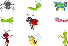 Collection of insects Royalty Free Stock Image