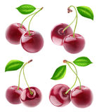 Collection of isolated cherry fruits Royalty Free Stock Photo