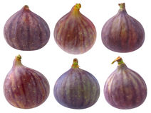 Collection of isolated fig fruits Royalty Free Stock Photos