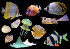 Collection of isolated fish and shells. On black background Royalty Free Stock Images