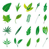 Collection of isolated leaves Royalty Free Stock Image