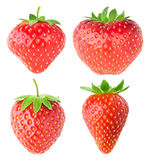 Collection of isolated strawberries royalty free stock images