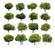 Collection of Isolated tree on white background Royalty Free Stock Images