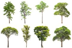 The collection of Isolated Trees on white background , A beautif. Ul trees from Thailand Royalty Free Stock Image