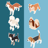 Collection of isometric dogs3 Stock Photos